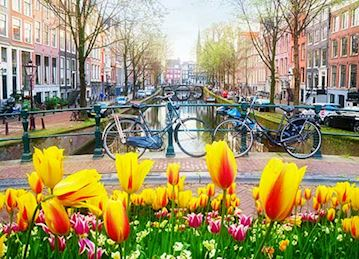 Amsterdam canal scene with colorful tulips in the foreground